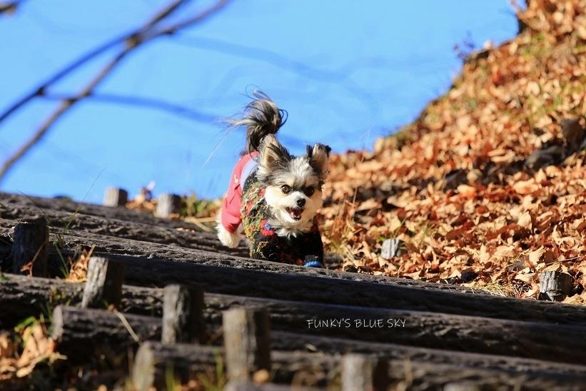 それから小さなオオカミは・・・_c0145250_09501490.jpg