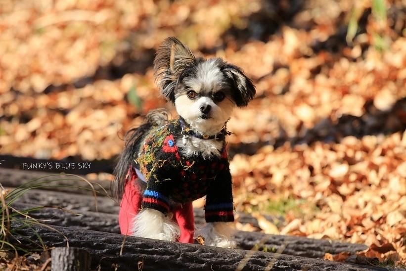 それから小さなオオカミは・・・_c0145250_09502168.jpg