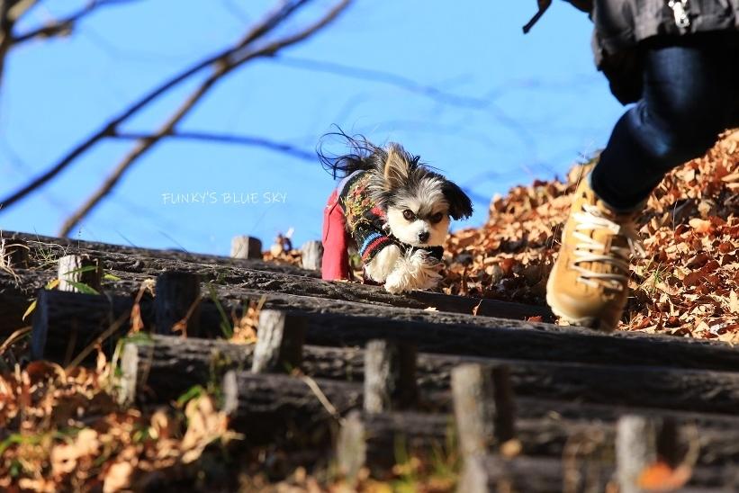 それから小さなオオカミは・・・_c0145250_09502465.jpg
