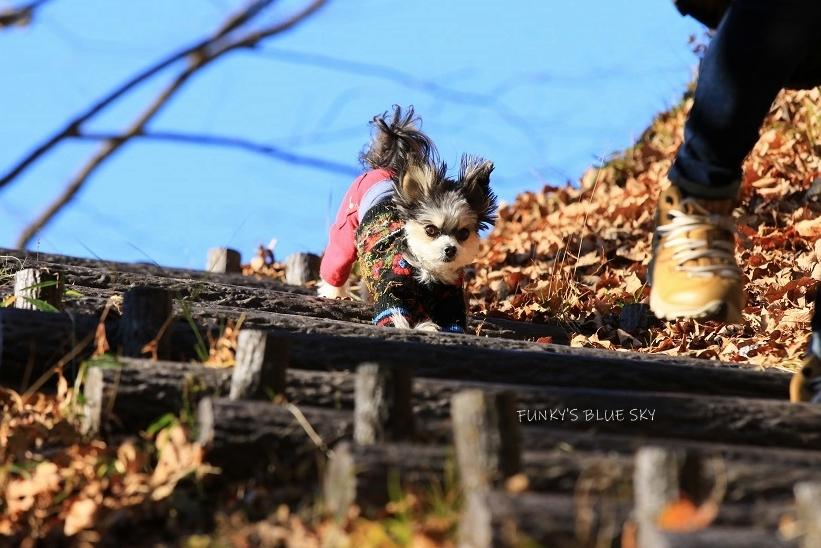 それから小さなオオカミは・・・_c0145250_09502777.jpg
