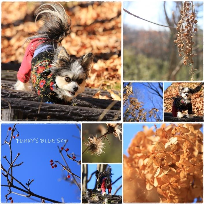 それから小さなオオカミは・・・_c0145250_09511930.jpg