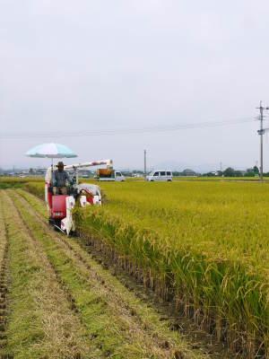 熊本の美味しいお米(七城米、菊池水源棚田米、砂田のれんげ米)大好評発売中!こだわり紹介 その3_a0254656_18243535.jpg