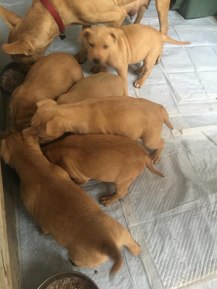 新規・母犬&仔犬のお預かりさん、里親さん、移送ボランティアさん緊急募集!!_c0372561_22201458.jpg