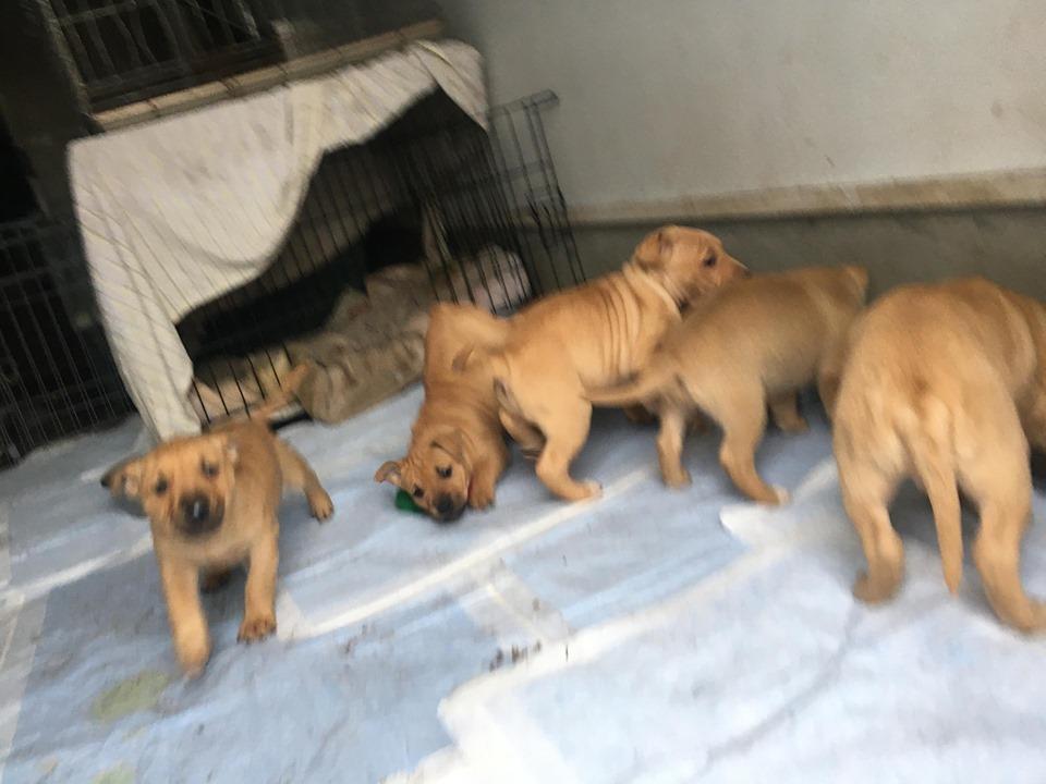 新規・母犬&仔犬のお預かりさん、里親さん、移送ボランティアさん緊急募集!!_c0372561_22203694.jpg