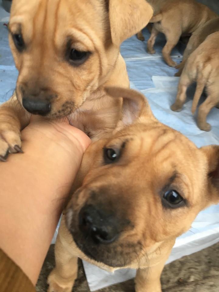 新規・母犬&仔犬のお預かりさん、里親さん、移送ボランティアさん緊急募集!!_c0372561_22204217.jpg