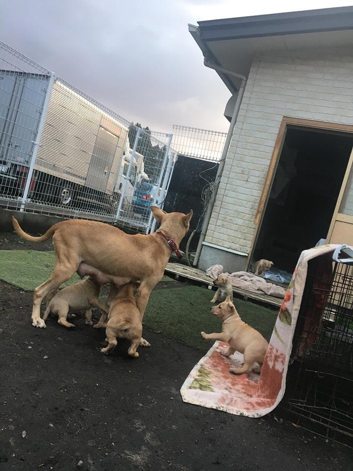 新規・母犬&仔犬のお預かりさん、里親さん、移送ボランティアさん緊急募集!!_c0372561_22205179.jpg