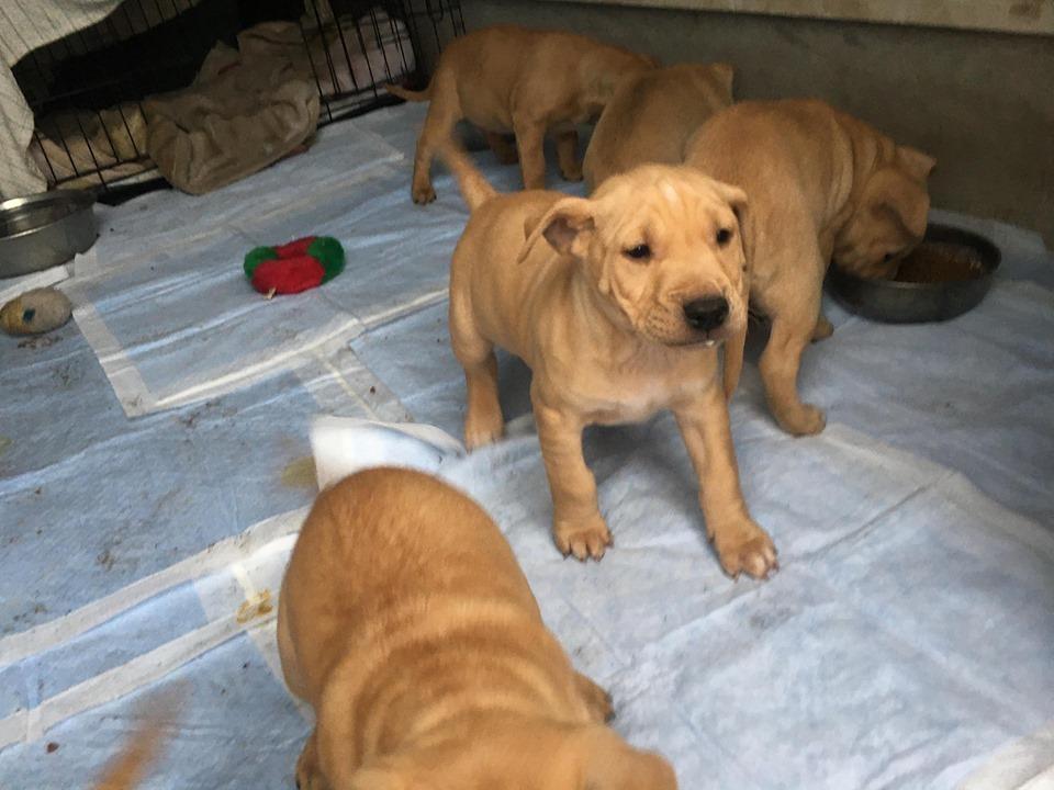新規・母犬&仔犬のお預かりさん、里親さん、移送ボランティアさん緊急募集!!_c0372561_22210166.jpg