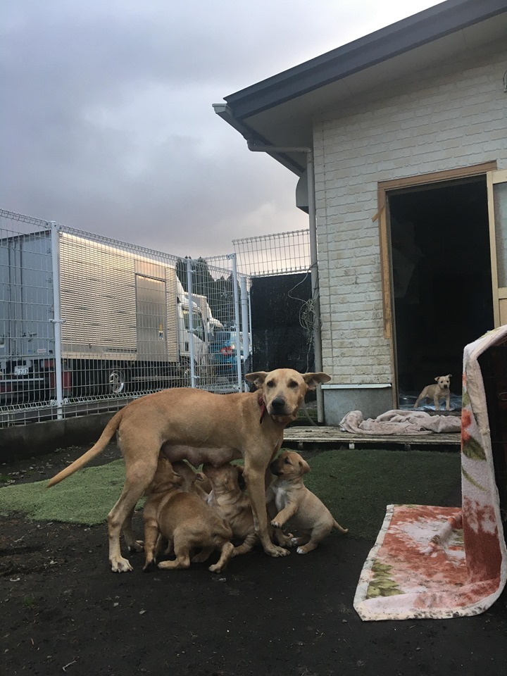 新規・母犬&仔犬のお預かりさん、里親さん、移送ボランティアさん緊急募集!!_c0372561_22210832.jpg