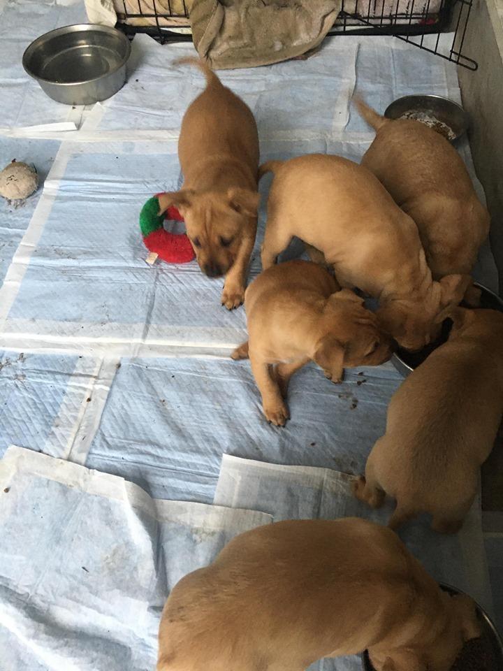 新規・母犬&仔犬のお預かりさん、里親さん、移送ボランティアさん緊急募集!!_c0372561_22211808.jpg