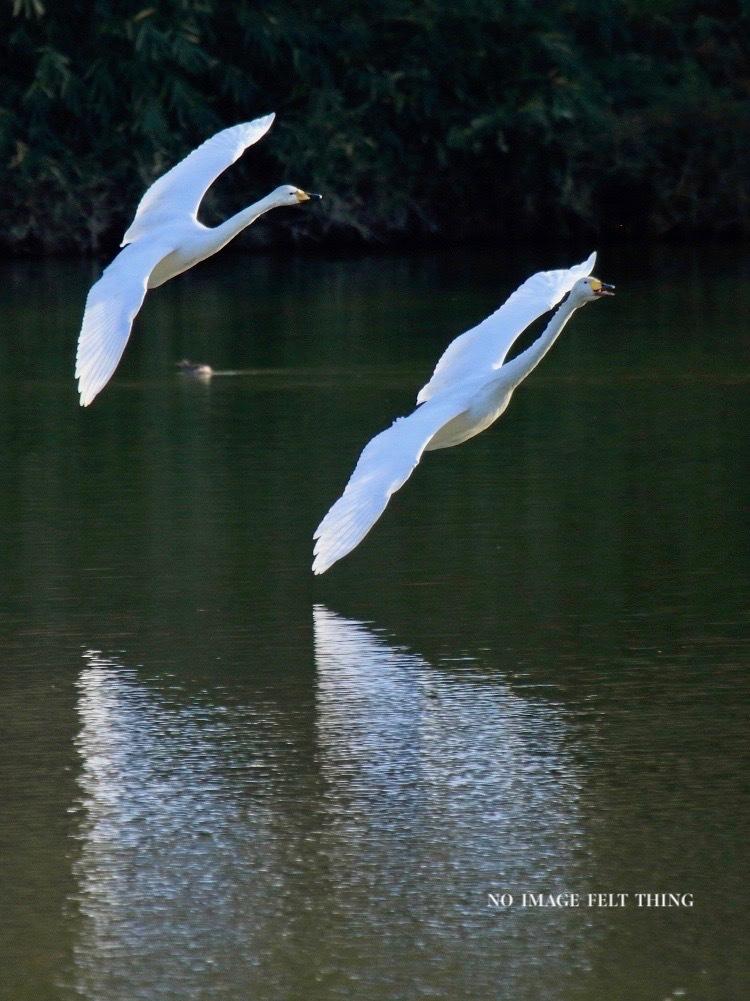 Landing♪_d0367763_19410422.jpg