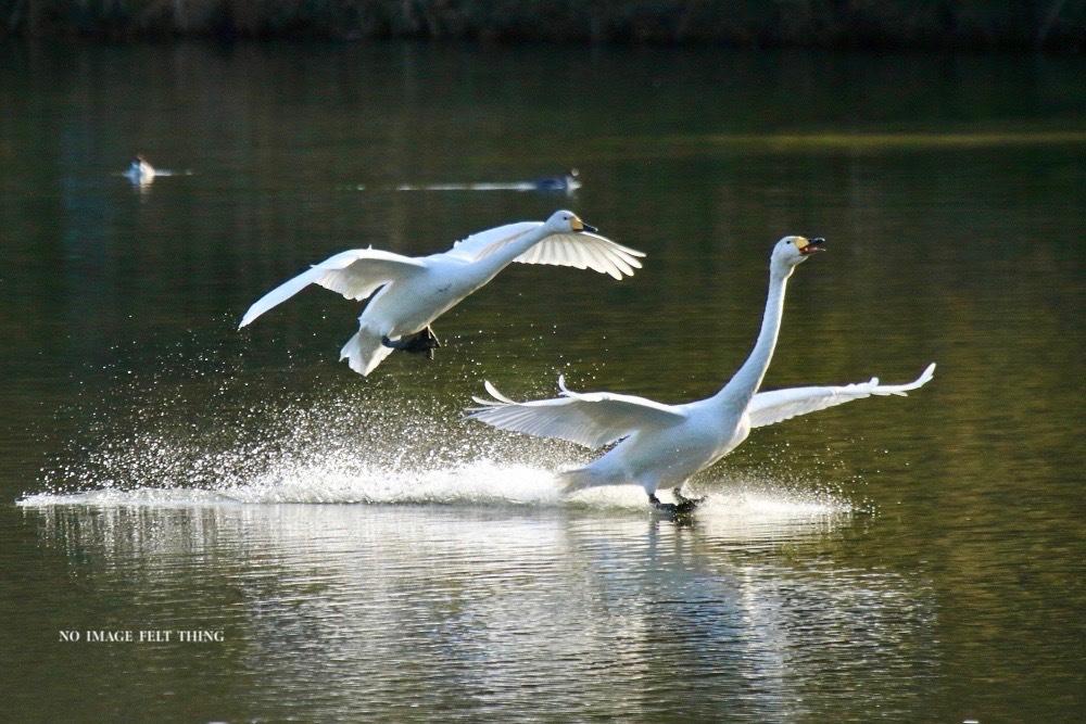 Landing♪_d0367763_19410446.jpg