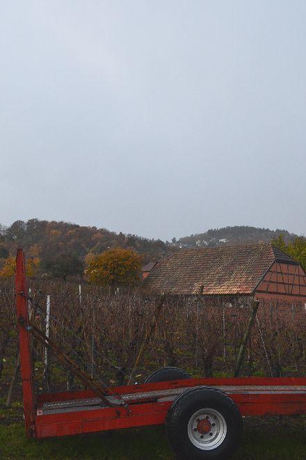 葡萄の葉をレースに変える_b0346275_09594210.jpg