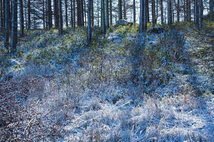 霧氷の林_c0085877_06210205.jpg