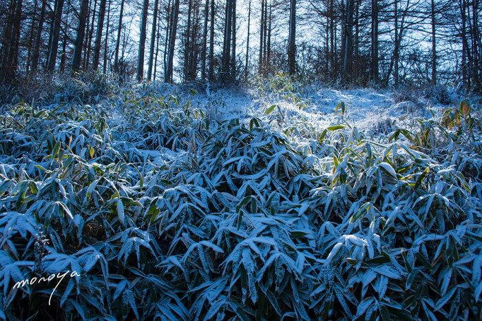 霧氷の林_c0085877_06211150.jpg