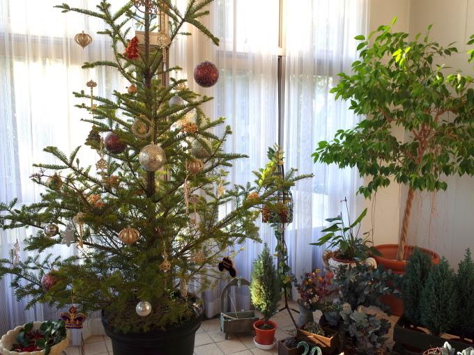 横浜山手西洋館 世界のクリスマス 2019_c0188784_22381817.jpg