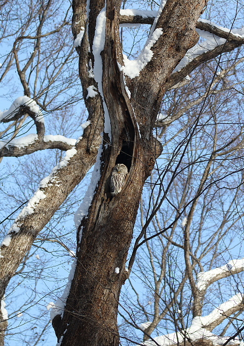雪晴れの森にて・・フクちゃん_c0113597_13263945.jpg