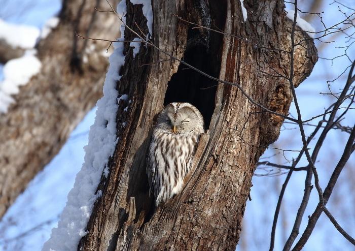 雪晴れの森にて・・フクちゃん_c0113597_13292778.jpg