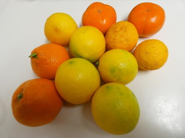 Lemon  /  koba_d0135801_22271041.jpg