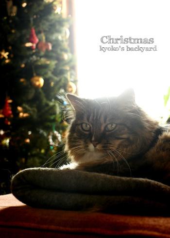 え?今日がクリスマス?_b0253205_08443995.jpg