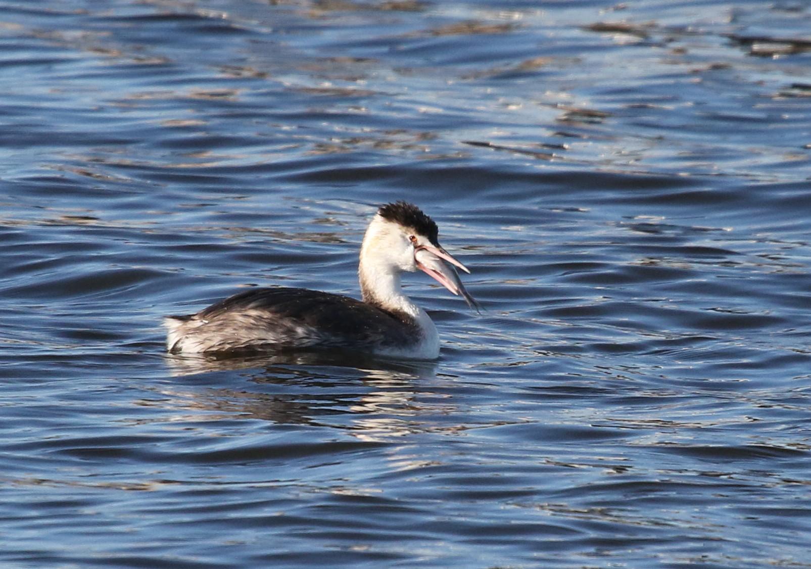 MFの沼で鳥たちの食事場面を見る事ができました_f0239515_17275751.jpg