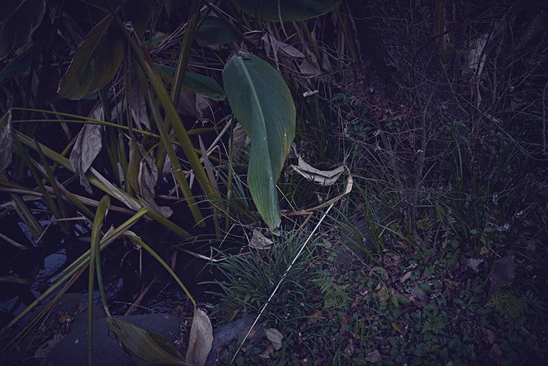 終末の庭で_a0214416_20121120.jpg