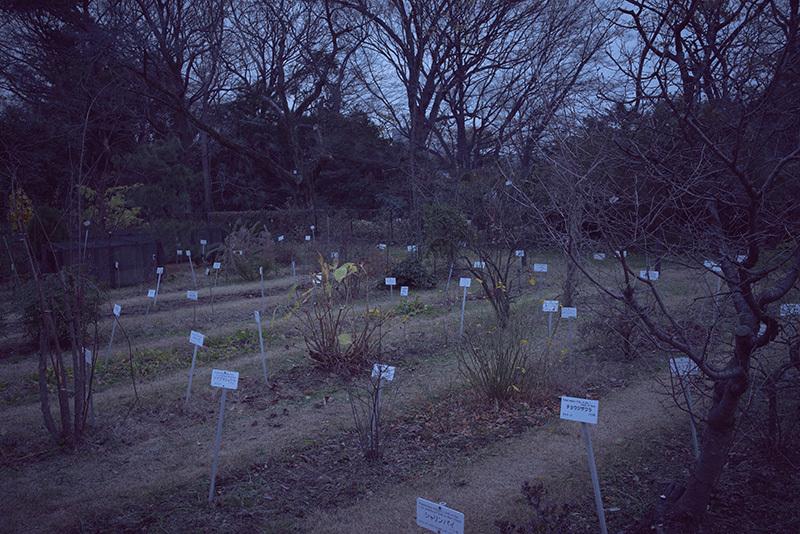 終末の庭で_a0214416_20121248.jpg