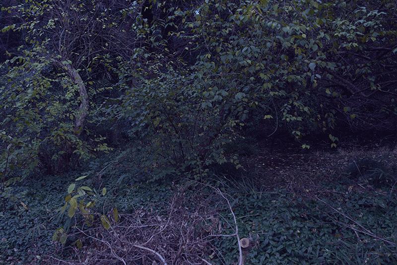 終末の庭で_a0214416_20121262.jpg