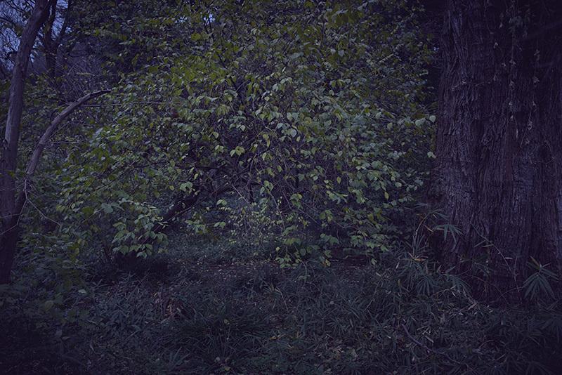 終末の庭で_a0214416_20121290.jpg