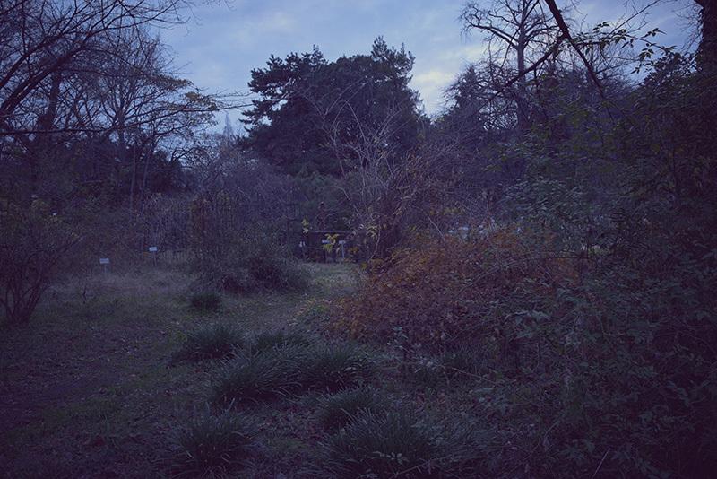 終末の庭で_a0214416_20121760.jpg