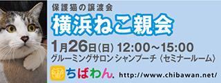 12/24 センターレポート【猫編】Part2_f0078320_17530474.jpg