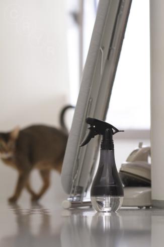 [猫的]天敵_e0090124_23324110.jpg