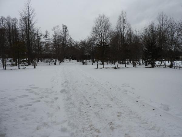 今週末の天気と気温(2019年12月26日):追記あり_b0174425_17351714.jpg