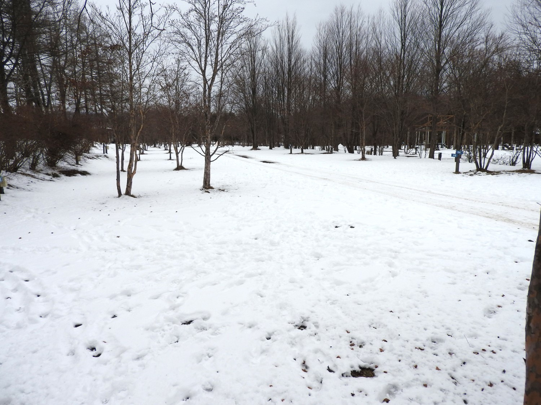 今週末の天気と気温(2019年12月26日):追記あり_b0174425_21124147.jpg