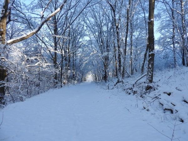 今週末の天気と気温(2019年12月26日):追記あり_b0174425_21445625.jpg