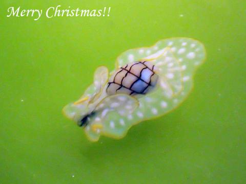 メリークリスマス_c0193735_21024462.jpg
