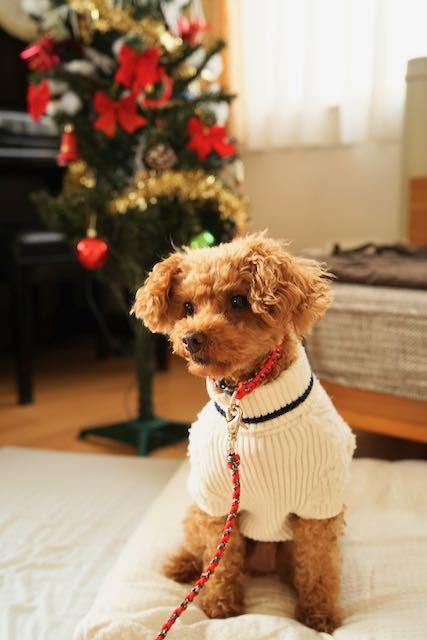ほっこりMerry Christmas!_c0220337_08324481.jpeg