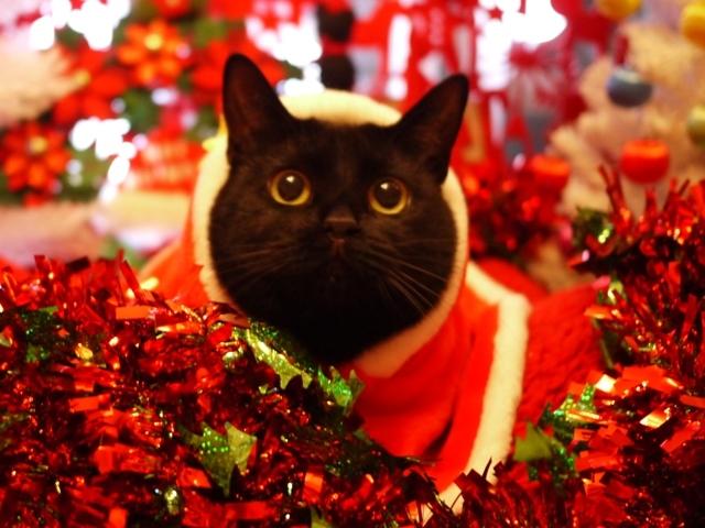 クリスマス猫 めりぃぽぴんず編。_a0143140_20444928.jpg