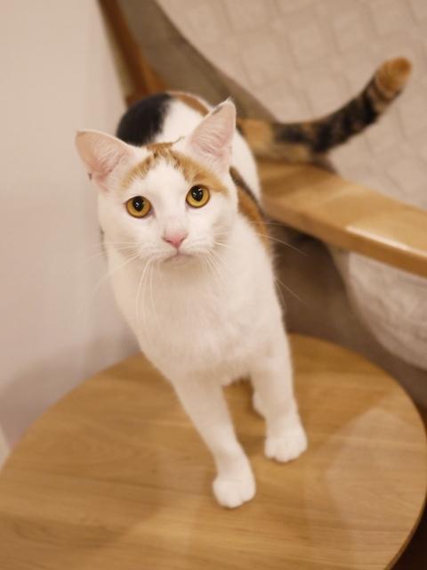 猫のお留守番 みつちゃん編。_a0143140_20574632.jpg