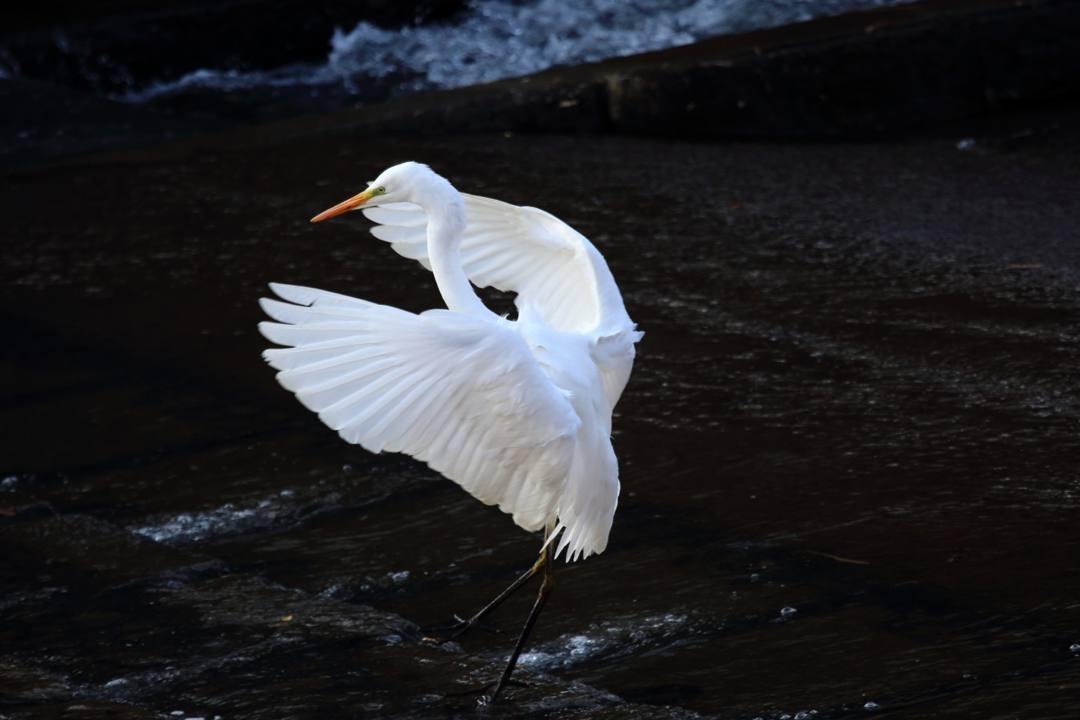 水辺の野鳥_e0403850_21074874.jpg