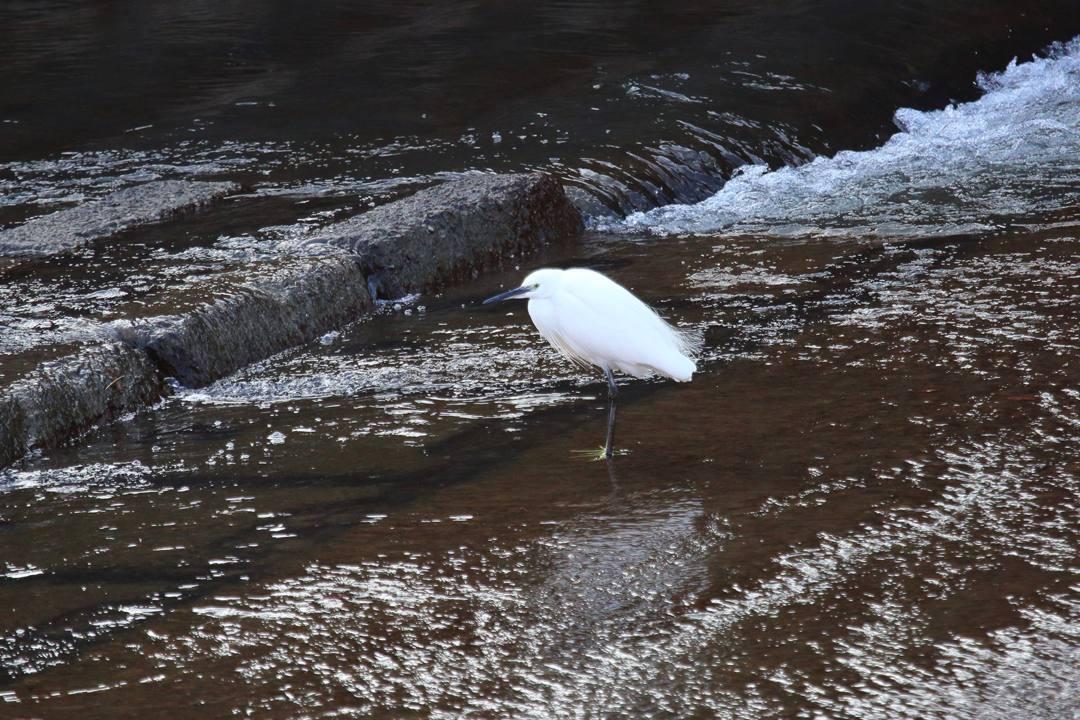 水辺の野鳥_e0403850_21075587.jpg