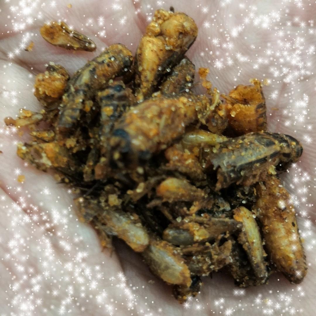 虫さん達のクリスマスプレゼント~☆ #昆虫食_a0004752_08190197.jpg