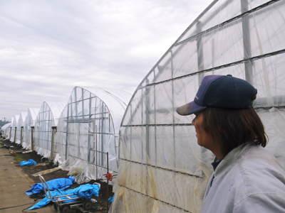 夢スイカ 平成31年3月下旬の収穫へ向け小玉スイカ『ひとりじめHM』の定植後の様子を現地取材_a0254656_15024822.jpg