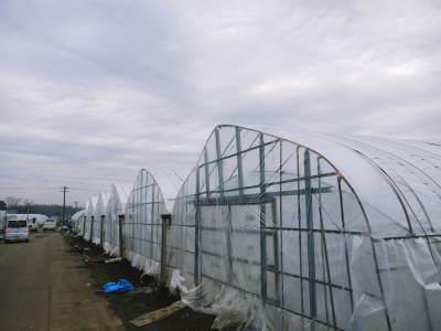 夢スイカ 平成31年3月下旬の収穫へ向け小玉スイカ『ひとりじめHM』の定植後の様子を現地取材_a0254656_15043182.jpg