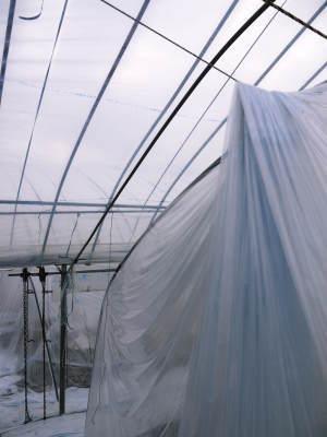 夢スイカ 平成31年3月下旬の収穫へ向け小玉スイカ『ひとりじめHM』の定植後の様子を現地取材_a0254656_15082656.jpg