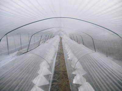 夢スイカ 平成31年3月下旬の収穫へ向け小玉スイカ『ひとりじめHM』の定植後の様子を現地取材_a0254656_15110277.jpg