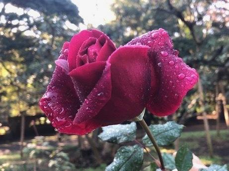 2019年感謝の言葉と新年月例会、新年会のお誘い_a0094959_15050044.jpg