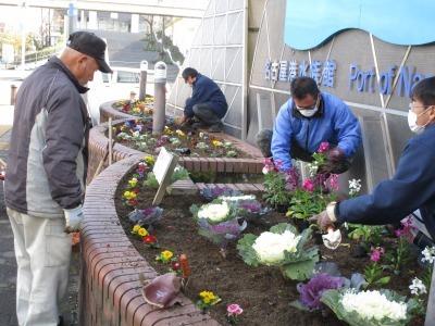ガーデンふ頭総合案内所前花壇の植替えR1.12.23_d0338682_10252965.jpg