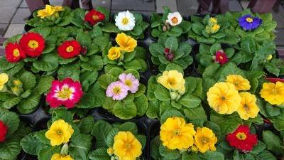 ガーデンふ頭総合案内所前花壇の植替えR1.12.23_d0338682_10314084.jpg