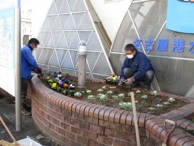 ガーデンふ頭総合案内所前花壇の植替えR1.12.23_d0338682_10361432.jpg
