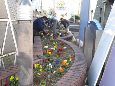 ガーデンふ頭総合案内所前花壇の植替えR1.12.23_d0338682_10362372.jpg